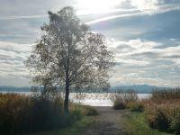 Bild 25: Ferienwohnung Fam. Sauer - mit herrlichem See- und Alpenblick -
