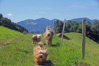 Hunde haben Spaß im Urlaub im Allgäu. - Bild 13: Kinderfreundliche Ferienwohnungen Landhaus Jörg im Allgäu - Familienwohnung