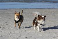 Badegäste am Ostseehundestrand. Sehr sexy - Bild 1: Ostseeurlaub mit Hund - Wassergrundstück - Angeln