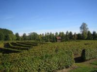 Irrgarten nur 200m vom Ferienhaus entfernt - Bild 13: Ferienhaus am Klosterwald - Dargun