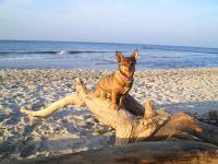 Urlaub mit Hund auf dem idyllischen Wassergrundstück (6000m²) direkt am Bodden mit eigenem Zugang, Spiel- und Liegewiese. Hundestrand in ca. 4km. - Bild 1: Ostseeurlaub mit Hund - Wassergrundstück Piratennest Darß