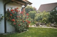 Bild 10: Ferienwohnung Breyer auf der Halbinsel Höri am Bodensee