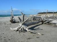 Weststrand nach einem Sturm im Herbst, Winter, Frühling - Bild 7: Erholung am Wasser - Ostseehalbinsel Darss mit Hund - Angeln