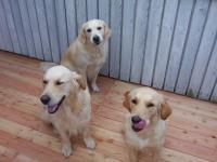 Bild 7: Landhaus Bodensee in Panormasichtlage Hunde sind herzlich willkommen. WOHNUNG 2
