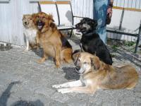 Bild 7: Landhaus Bodensee in Panormasichtlage Hunde sind herzlich willkommen. WOHNUNG 3