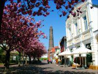 Bild 7: Nichtraucher-Ferienwohnung Bäumer auf Borkum