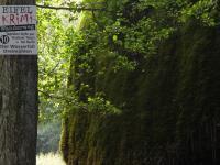 Für Krimifans ein Muss - ebenso das Kriminalmuseum und das Café Sherlock in Hillesheim. - Bild 22: Eifel-Ferienhaus Fliegenpilz - für Ihren Urlaub mit und ohne Hund