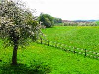 Unser Anwesen ist rundherum von Wiesen umgeben. - Bild 13: Eifelferienwohnung Zangerle, Ferien in der schönen Westeifel