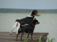 Hier müssen Hunde mit ! - Bild 1: Darssurlaub - Wassergrundstück mit Hund - eingezäunter Terrasse, Angeln