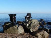 Bild 1: Böhrs Hoff Fehmarn Ferienwohnung im Landhausstil ideal für Hundebesitzer