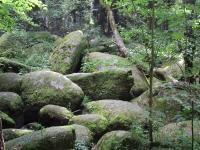 Bild 16: Schöne Ferienwohnung im Naturpark Oberpfälzer Wald! Gerne mit Hund(en)!