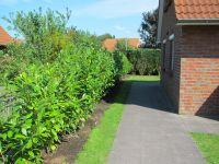Bild 4: Ferienhaus Porten,eingezäunter Garten Urlaub mit Hund in Neßmersiel-Nordsee
