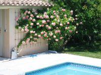 Bild 13: Ferienhaus in Südfrankreich/Provence mit Pool bei St. Remy de Provence