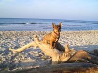 Bild 1: Ostseeurlaub Piratennest Darß - Hundeparadies - Wassergrundstück