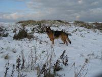 Bild 37: Schicke Fewo an der Nordseeküste-Ostfriesland