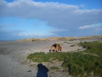 Bild 16: Schicke Fewo an der Nordseeküste-Ostfriesland