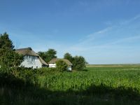 Bild 13: Ferienhaus Witthuis - Perle am Deich, traumhafte Lage, 350m zur Nordsee
