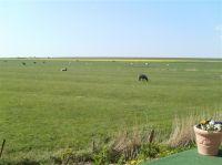 Der Blick über Land bis zum 1 km entfernten Deich. Ruhe pur - Bild 13: Grüne Urlaubs-Insel im Wattenmeer *** Radmokerhus Pellworm