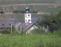 Ihre Aussicht zum Kirchturm und zum Brauneberg - Bild 25: Urlaub an der Mosel mit Hund