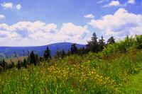 Bild 19: Kleine Ferienwohnung Ebert&Green im Erzgebirge