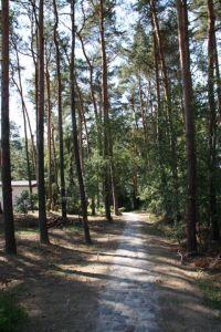 Bild 13: Ferienhaus Seebungalow direkt am Storkower See