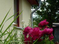 Bild 7: Kinder- u. hundefeundliches Ferienhaus in Binz, hell u. modern, mit Garten