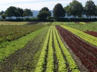 """Eine tolle Fahrradtour auf der Insel Reichenau vorbei an Gemüse und Salatfeldern könnnen wir persönlich nur empfehlen...für uns jedes Jahr ein muß in den Sommerferien. - Bild 34: Ferienwohnung """"Dorfblick"""" im Haus """"Jehle"""" in Oberwihl/Schwarzwald"""