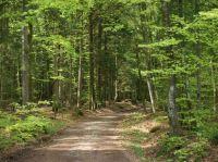 """Direkt vom Haus aus, können Sie mit dem wandern beginnen. Tolle Wege mit guter Beschilderung in der ganzen Gemeinde. - Bild 22: Ferienwohnung """"Dorfblick"""" im Haus """"Jehle"""" in Oberwihl/Schwarzwald"""