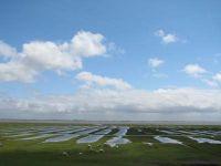 Bild 16: Süderhus - Süderhafen auf Nordstrand, Weltnaturerbe Wattenmeer, Nordsee