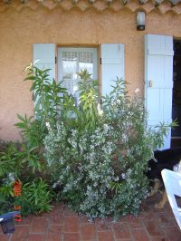Bild 10: Kleines originelles Rebhaus mit Tierhgehege in der Provence verte