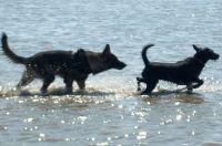Thimo sucht Freundin - Bild 13: Huus-Thimo an der Nordseeküste - Hunde willkommen - rauchen erlaubt - WLAN