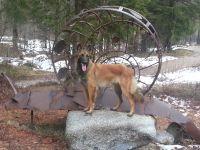 Bild 19: hundefreundliche Fewo Seeblick mit eigenem eingez. Garten+Pool am Ledrosee