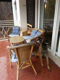 Bild 10: Villa Rosemarie mit traumhaften Blick über Ledrosee für Urlaub mit dem Hund