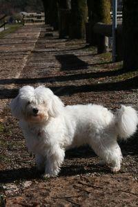 Bild 13: Villa Rosemarie mit traumhaften Blick über Ledrosee für Urlaub mit dem Hund