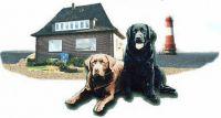 In unserem Ferienhaus Seeblick dürfen Sie gerne Ihren Hund mitbringen. Der große Garten ist eingezäunt, ein Hundestrand befindet sich in der Nähe. - Bild 1: Ferienhaus Seeblick im Nordsee-Bad Dangast direkt beim Strand mit Hund