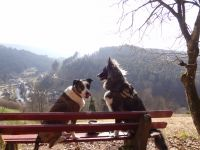 """Unsere beiden geniesen die Aussicht, beim Spaziergang gleich vom Haus aus....bei der """"kleinen """" Runde - Bild 28: Exclusive Studio- Ferienwohnung im Schwarzwald - Hund incl."""