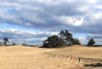 Ein natürlicher Sandflug auf den Veluwe, das großte Naturgebiet von Niederlande. - Bild 28: Weihnachten: 5 Nächte stehen, aber nur 3 zahlen! Großes schönes Ferienhaus
