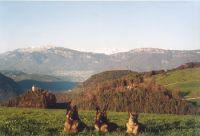direkt gegenüber gibt es zahlreiche Wanderwege. - Bild 7: entzückendes Domizil mit eigenem eingezäunem Garten in Südtirol