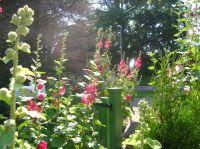 Bild 1: Wieck-Darß Viersternewohnung, große Sonnenterrasse, ruhige naturnahe Lage
