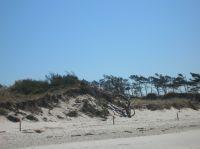 Bild 25: Wieck-Darß Viersternewohnung, große Sonnenterrasse, ruhige naturnahe Lage