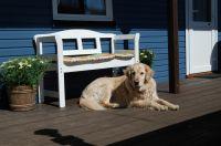auch Ihr Hund ist gern bei uns willkommen - Bild 4: Ferienhaus Wiebers am Hohenfelder Ostseestrand ( 150 m )