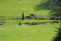 hauseigener Naturbadeweiher - Bild 13: Ferienidylle Eder 5 Sterne DTV / Bayerischer Wald
