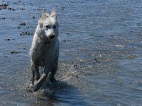 """An den Hundestränden in Norddeich oder Nessmersiel kann sich Ihr Vierbeiner richtig austoben! - Bild 13: Ferienhaus """"Friederike"""" an der Nordseeküste - ebenerdig - Hunde erlaubt"""
