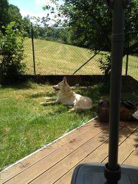 sich in den Schatten legen. Ob Schatten oder Sonne, Ihr Hund hat sehr viele Möglichkeiten seinen Lieblingsplatz zu finden - Bild 4: Ferienhaus Zaunkönig Ihr Urlaub mit Hund im Odenwald / Hessen