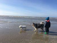 Ein Paradies für Hunde - Bild 16: Fewo 80 m zum Strand der Schaabe in Juliusruh.