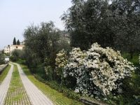 Bild 1: Ferienhaus LAURA in Malcesine in einem 2500 m² großen Olivenhain