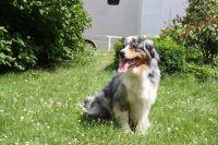 Einer unserer Hofhunde - Bild 10: Ferienzimmer auf dem Bauernhof