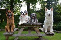 Bild 13: Ferienwohnung Sirius 3, urlaub mit Hund in schönes Ostfriesland
