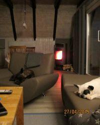 Bild 7: Ferienhaus Dorumer Uhlenhorst - Urlaub mit Hund an der Nordsee
