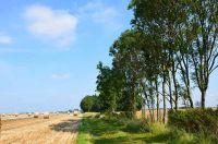 """Bild 10: Wangerland: """"Zum alten Friesen"""" Fewo BODO, naturnah vor den Toren Hooksiels"""
